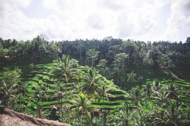 Riceterrace-1