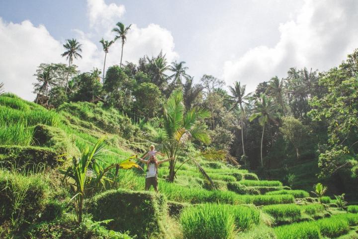Riceterrace-2
