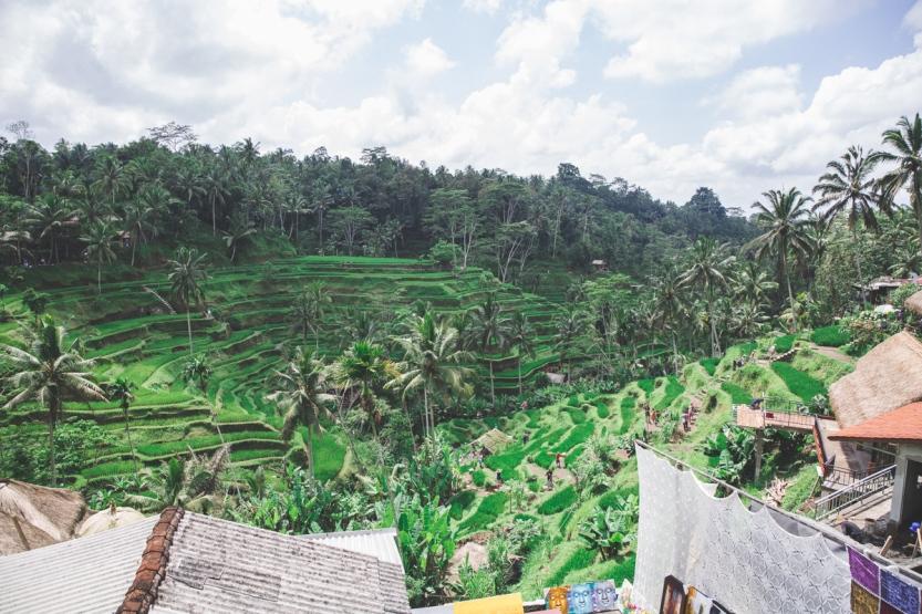 Riceterrace-8